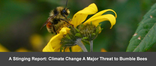 A Stinging Report: Climate Change A Major Threat to Bumble Bees