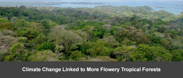Climate Change Linked to More Flowery Tropical Forests